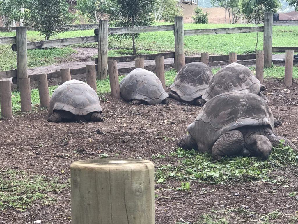 Tartarugas gigantes - Mauritius