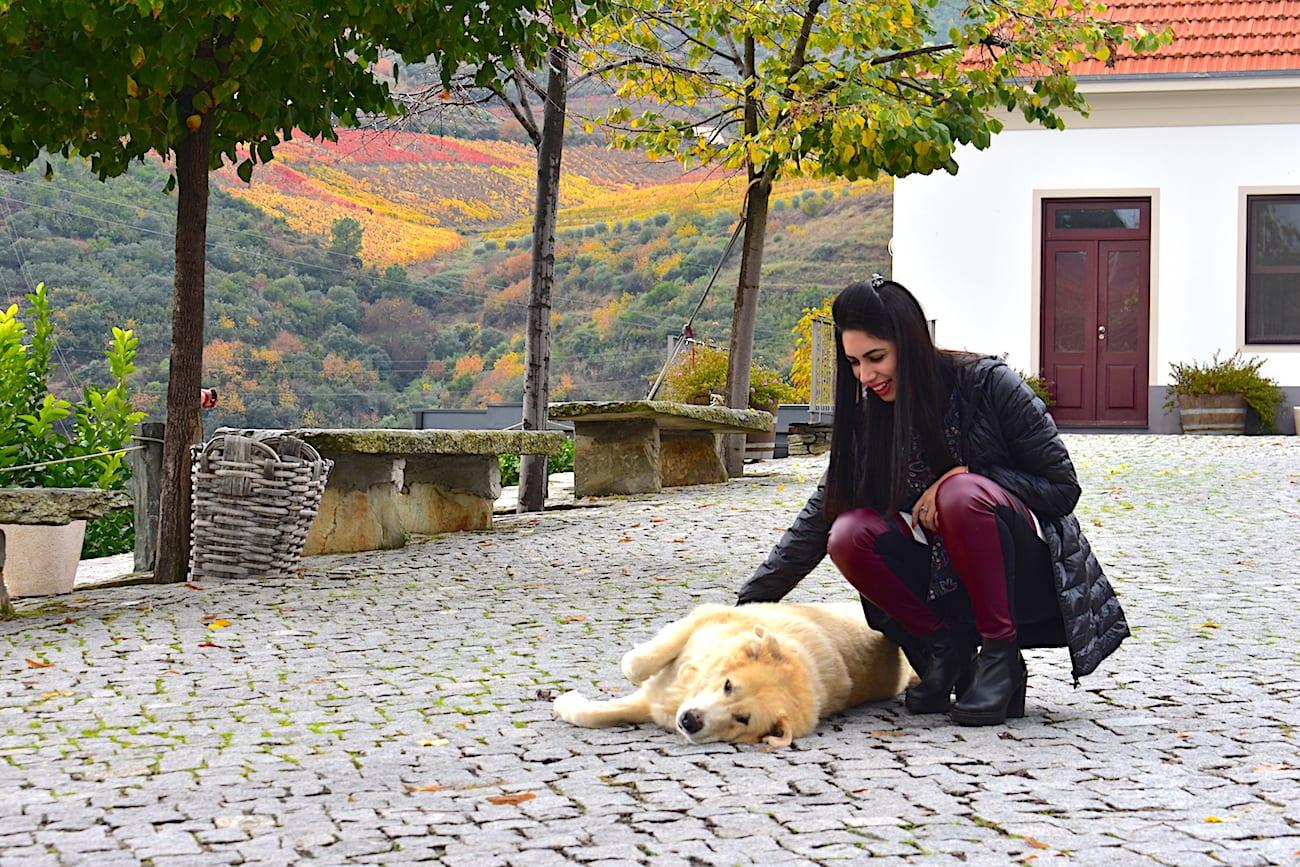 Vale do Douro - Quinta do Tedo | Foto: Anna